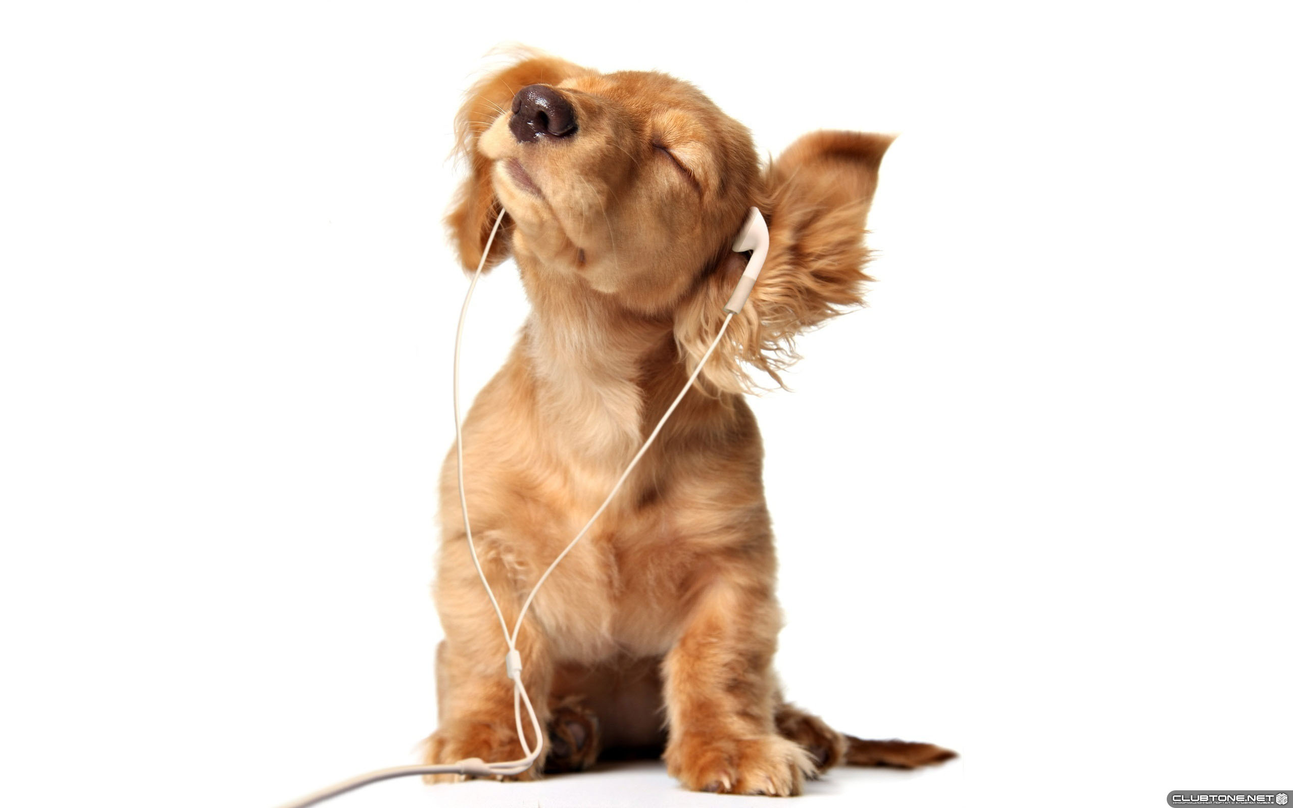 Dog in ear-phones