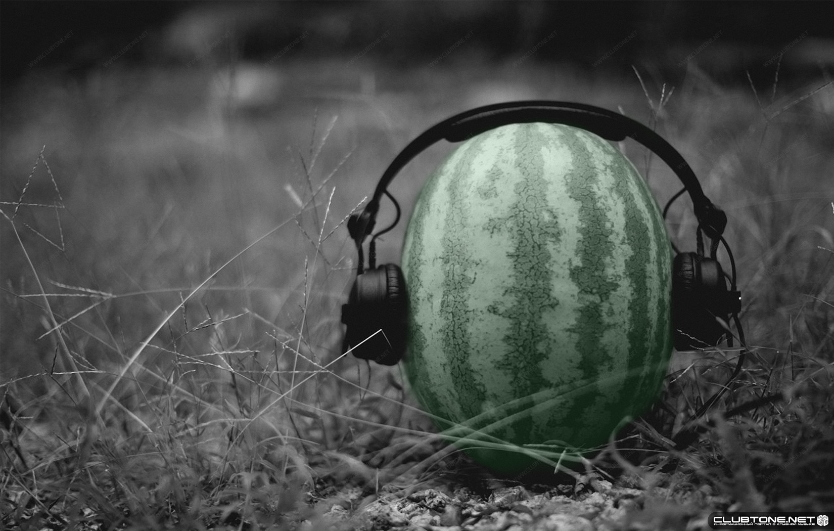 watermelon in ear-phones